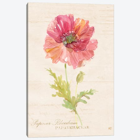 Botanical Poppy Canvas Print #CRO130} by Carol Robinson Canvas Print
