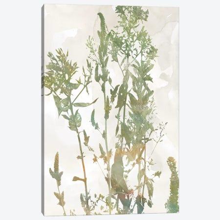 Untamed Garden I Canvas Print #CRO1311} by Carol Robinson Canvas Art