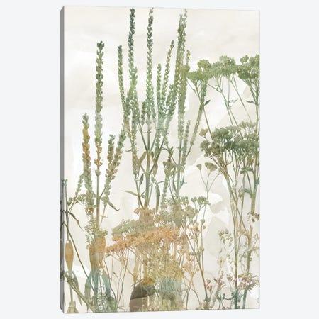 Untamed Garden II Canvas Print #CRO1312} by Carol Robinson Canvas Artwork