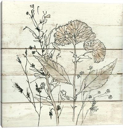 Dried Flower Study I Canvas Art Print