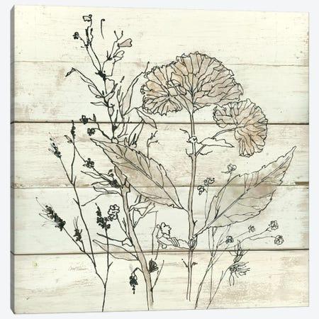 Dried Flower Study I Canvas Print #CRO139} by Carol Robinson Art Print