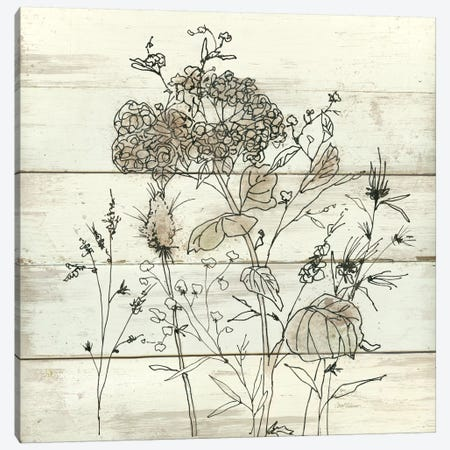 Dried Flower Study II Canvas Print #CRO140} by Carol Robinson Canvas Wall Art