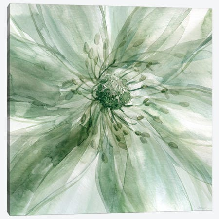 Macro Sage Flower I Canvas Print #CRO156} by Carol Robinson Canvas Artwork