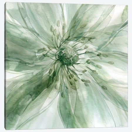 Macro Sage Flower I Canvas Print #CRO156} by Carol Robinson Canvas Artwork