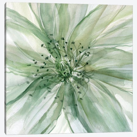 Macro Sage Flower II Canvas Print #CRO157} by Carol Robinson Canvas Artwork