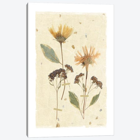 Pressed Daisies Canvas Print #CRO168} by Carol Robinson Canvas Wall Art