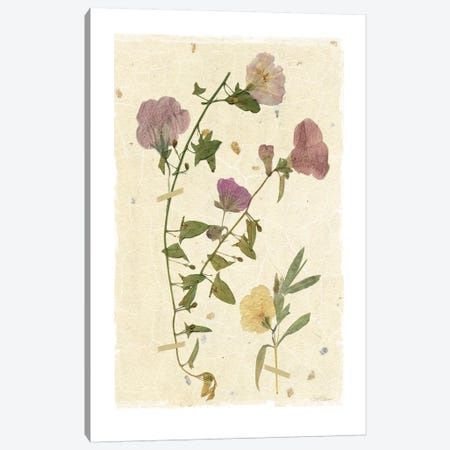 Pressed Morning Glory Canvas Print #CRO169} by Carol Robinson Canvas Wall Art