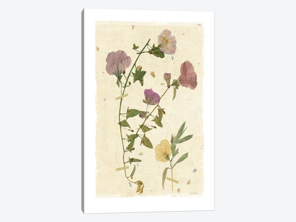 Pressed Morning Glory 1-piece Canvas Print