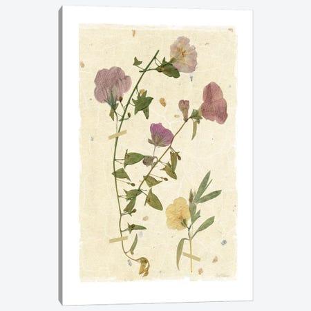 Pressed Morning Glory Canvas Print #CRO169} by Carol Robinson Canvas Wall Art