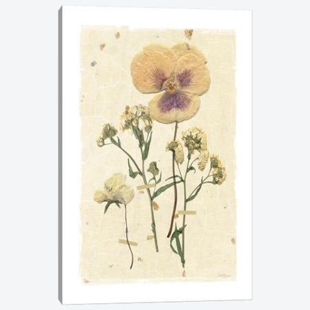 Pressed Pansy Canvas Print #CRO170} by Carol Robinson Art Print