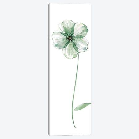 Sage Flower II Canvas Print #CRO176} by Carol Robinson Canvas Artwork