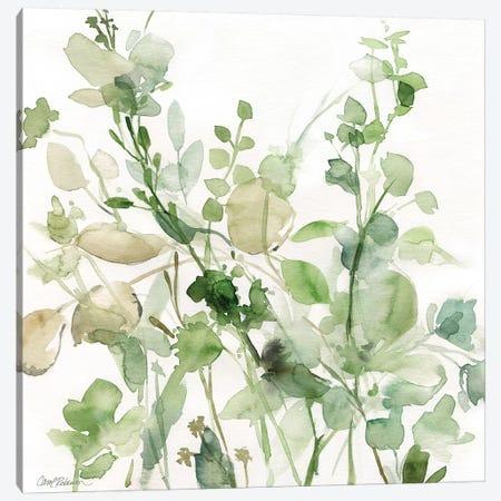 Sage Garden II Canvas Print #CRO178} by Carol Robinson Canvas Art Print