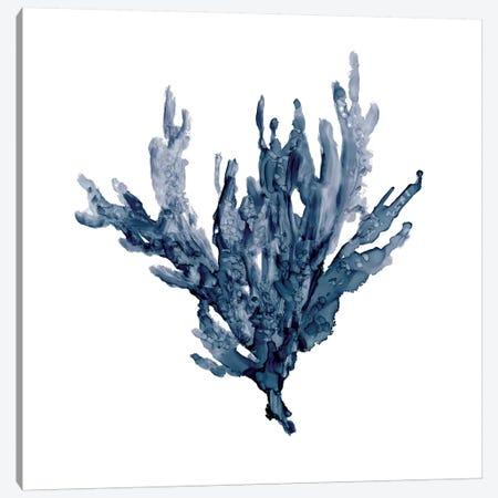 Sea Coral I Canvas Print #CRO179} by Carol Robinson Canvas Print