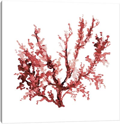 Sea Coral III Canvas Art Print