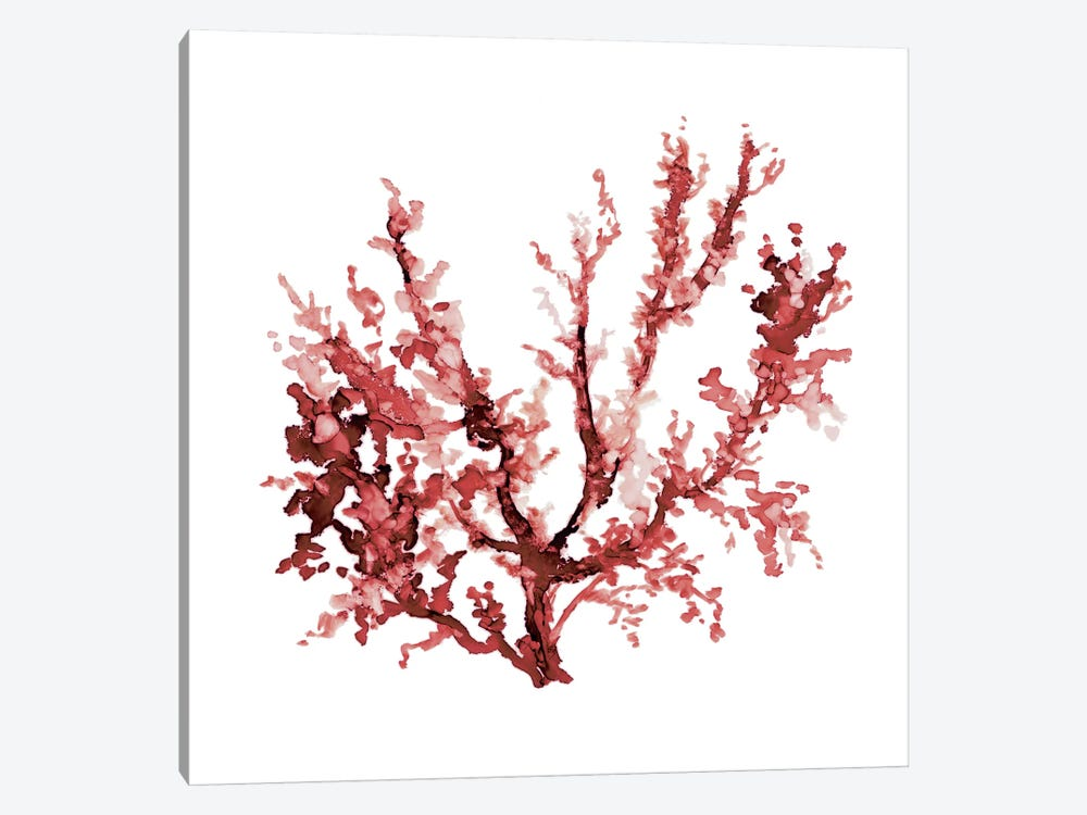 Sea Coral III by Carol Robinson 1-piece Art Print