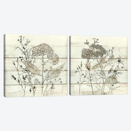 Dried Flower Study Diptych Canvas Print Set #CRO2HSET006} by Carol Robinson Canvas Print