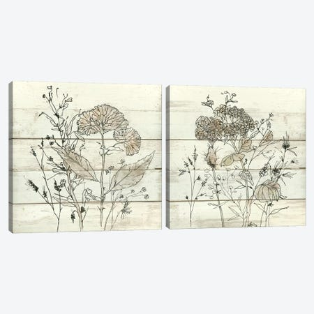Dried Flower Study Diptych Canvas Print Set #CRO2HSET006} by Carol Robinson Canvas Print