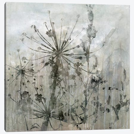 Winter's Lace I Canvas Print #CRO325} by Carol Robinson Canvas Print