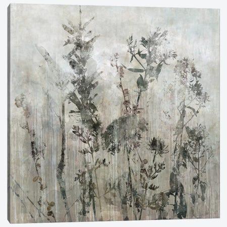 Winter's Lace II Canvas Print #CRO326} by Carol Robinson Canvas Art Print