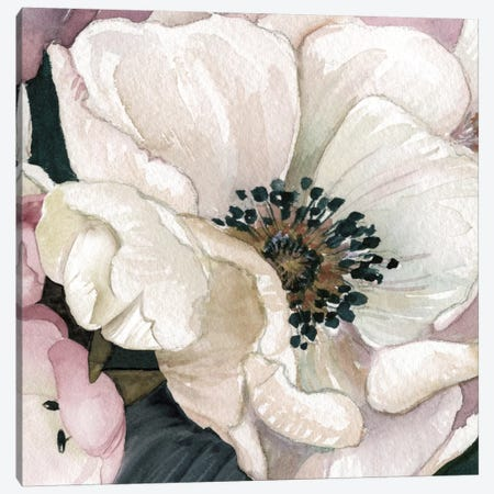 Anemone Study III Canvas Print #CRO332} by Carol Robinson Canvas Art Print