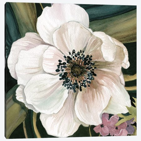 Anemone Study IV Canvas Print #CRO333} by Carol Robinson Canvas Print