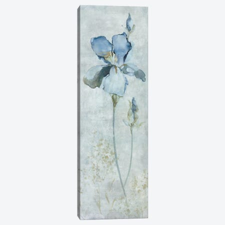 Blue Iris Canvas Print #CRO334} by Carol Robinson Canvas Artwork