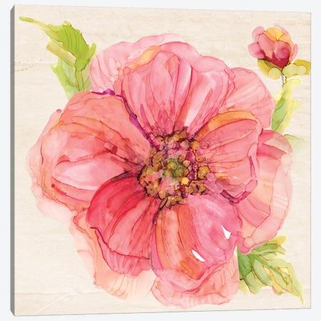 Botanical Peony In Zoom Canvas Print #CRO338} by Carol Robinson Canvas Print