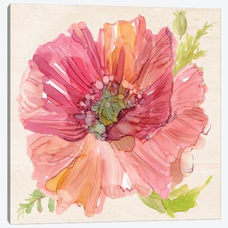 Botanical Poppy In Zoom Canvas Print #CRO339} by Carol Robinson Canvas Print