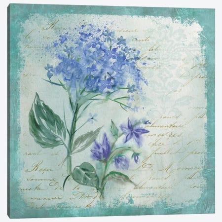 Hydrangea Medley Canvas Print #CRO351} by Carol Robinson Canvas Print