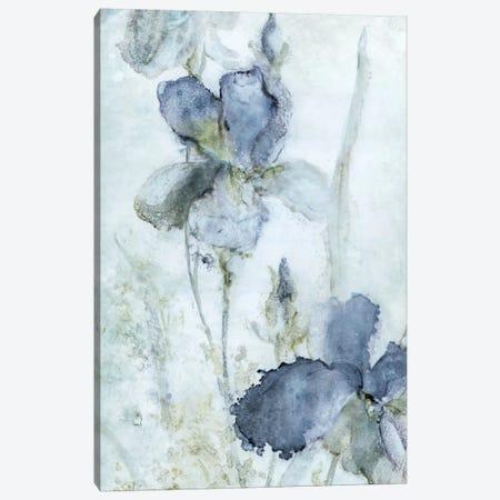 Morning Iris Canvas Print #CRO358} by Carol Robinson Canvas Print