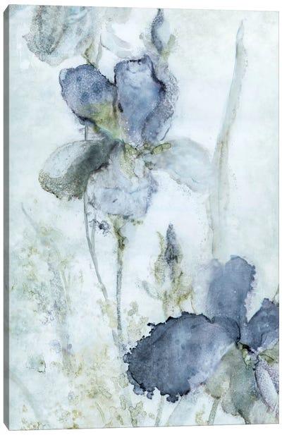 Morning Iris Canvas Art Print