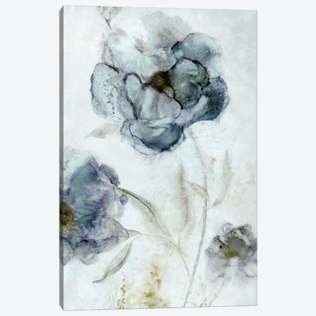 Morning Peony Canvas Print #CRO359} by Carol Robinson Canvas Print