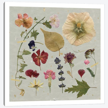 Pressed Assortment I Canvas Print #CRO361} by Carol Robinson Canvas Wall Art