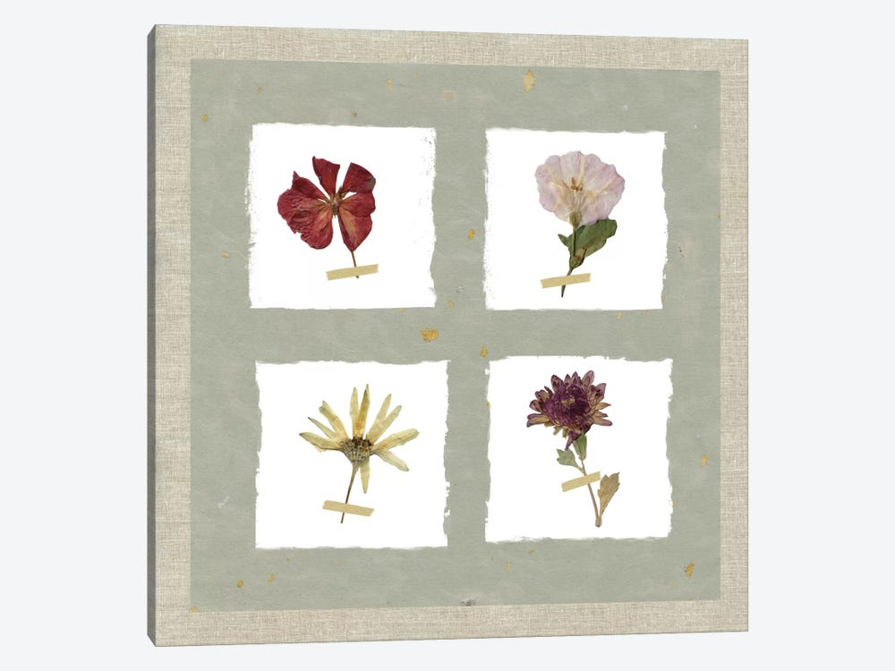 Pressed Blooms I by Carol Robinson 1-piece Canvas Wall Art