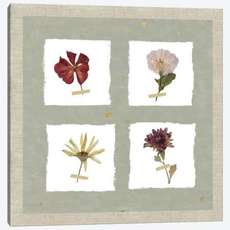 Pressed Blooms I Canvas Print #CRO363} by Carol Robinson Canvas Artwork