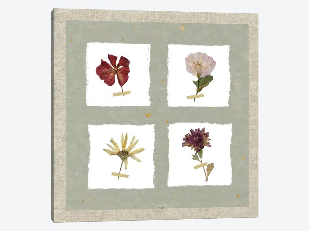 Pressed Blooms I by Carol Robinson 1-piece Canvas Wall Art