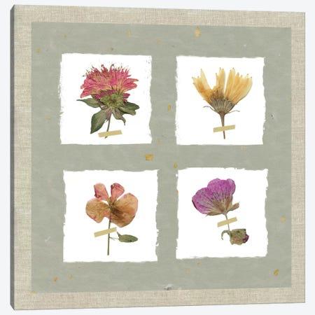 Pressed Blooms II Canvas Print #CRO364} by Carol Robinson Canvas Print