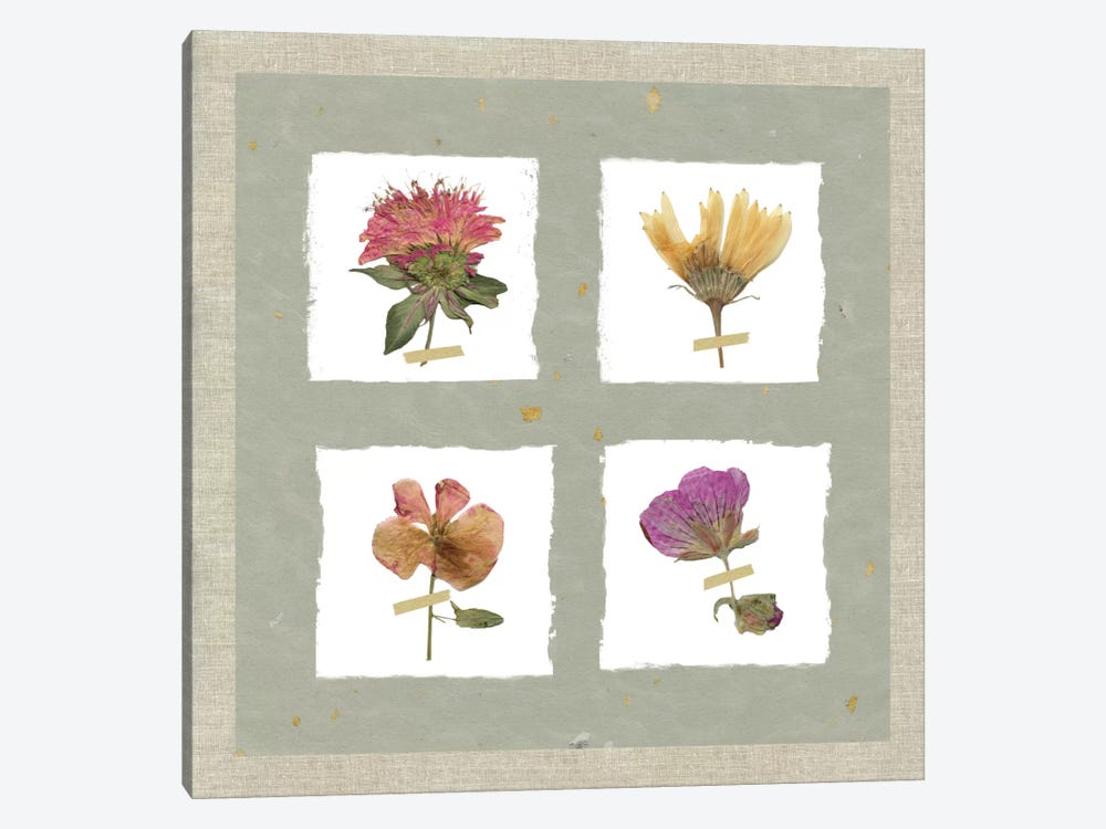 Pressed Blooms II by Carol Robinson 1-piece Canvas Art Print