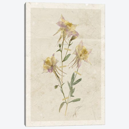 Pressed Columbine I Canvas Print #CRO365} by Carol Robinson Art Print