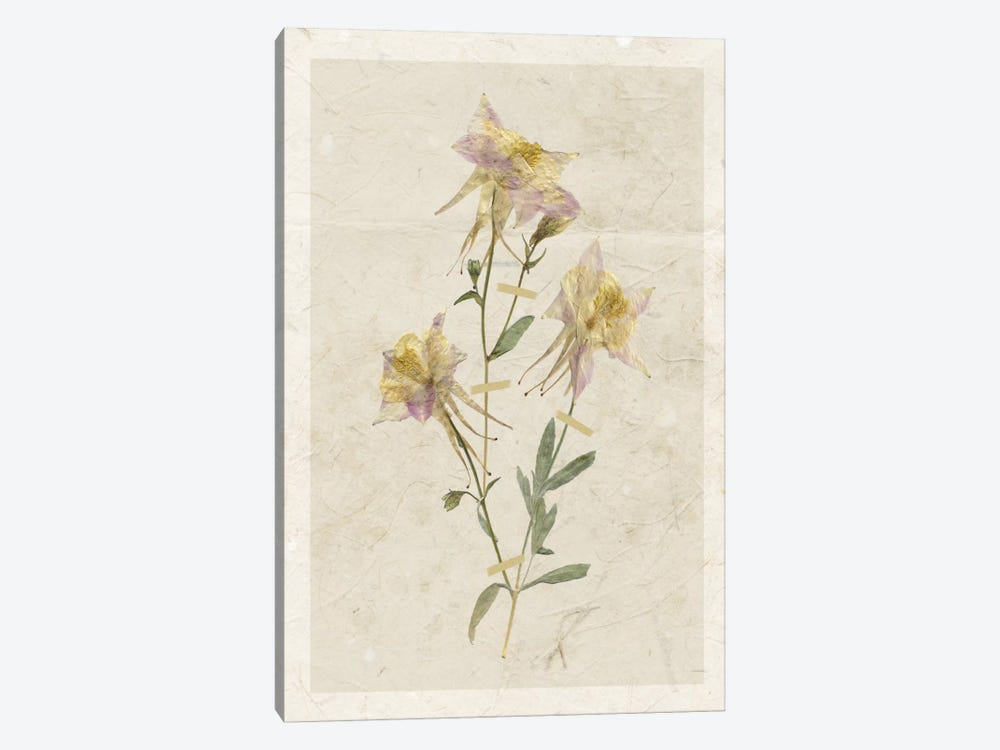 Pressed Columbine I by Carol Robinson 1-piece Canvas Artwork