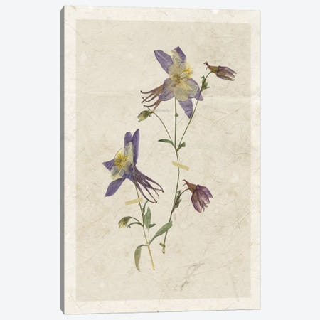 Pressed Columbine II Canvas Print #CRO366} by Carol Robinson Canvas Art Print