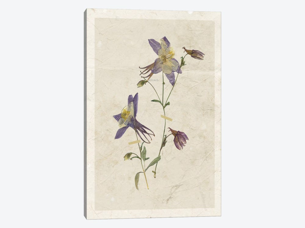 Pressed Columbine II by Carol Robinson 1-piece Art Print