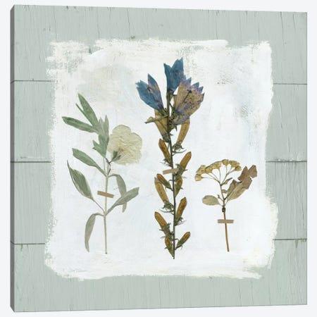 Pressed Flowers On Shiplap I Canvas Print #CRO367} by Carol Robinson Art Print