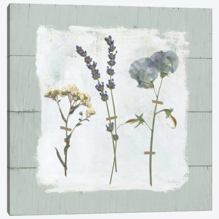 Pressed Flowers On Shiplap II Canvas Print #CRO368} by Carol Robinson Canvas Art