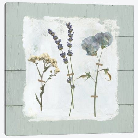 Pressed Flowers On Shiplap II Canvas Print #CRO368} by Carol Robinson Canvas Art