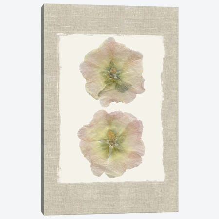 Pressed Hollyhocks I Canvas Print #CRO369} by Carol Robinson Canvas Artwork