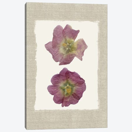 Pressed Hollyhocks II Canvas Print #CRO370} by Carol Robinson Art Print
