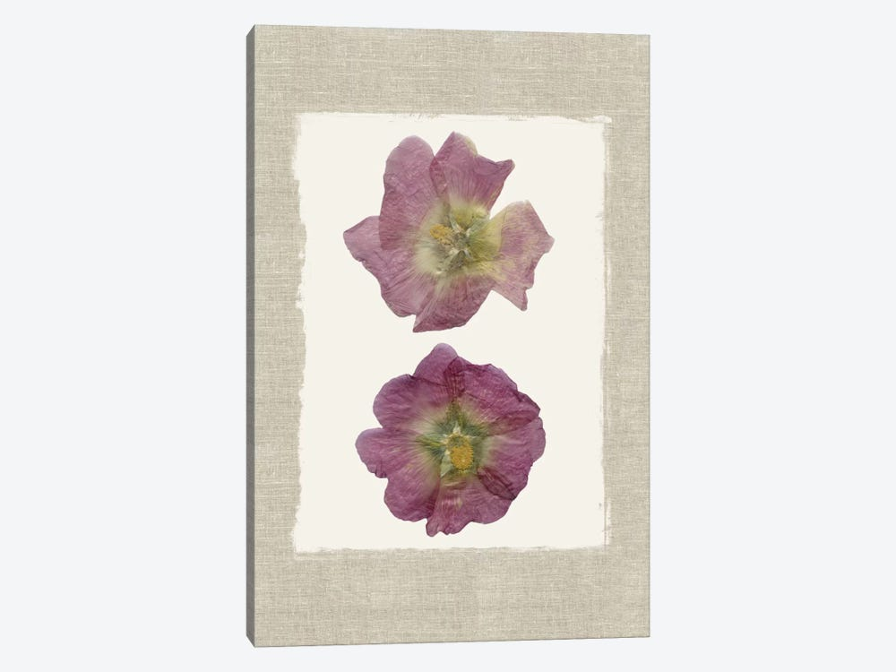Pressed Hollyhocks II 1-piece Canvas Art