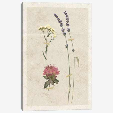 Pressed Lavender I Canvas Print #CRO371} by Carol Robinson Canvas Art Print