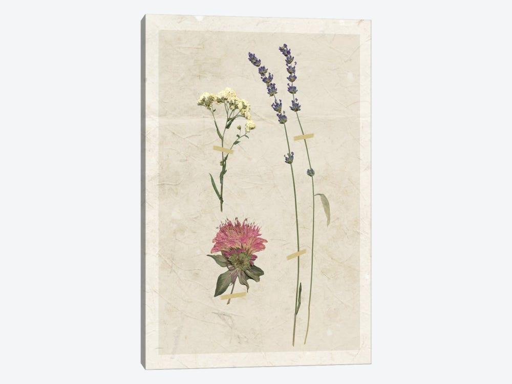 Pressed Lavender I by Carol Robinson 1-piece Art Print